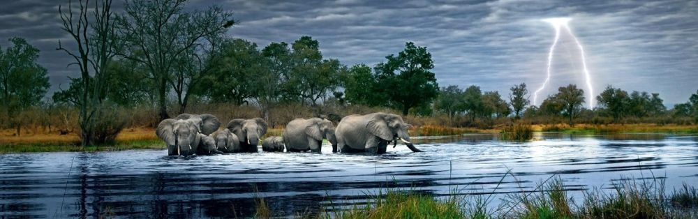 Herd-of-Elephants-2000-piece-panoramic-jigsaw-puzzles1